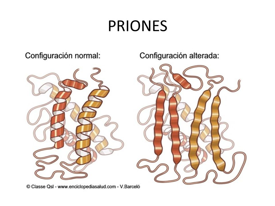 Priones-Persea